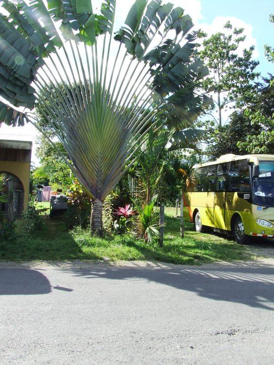 costa rica 2011 216